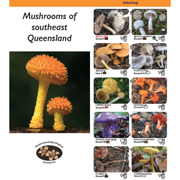 Mushrooms of southeast Queensland