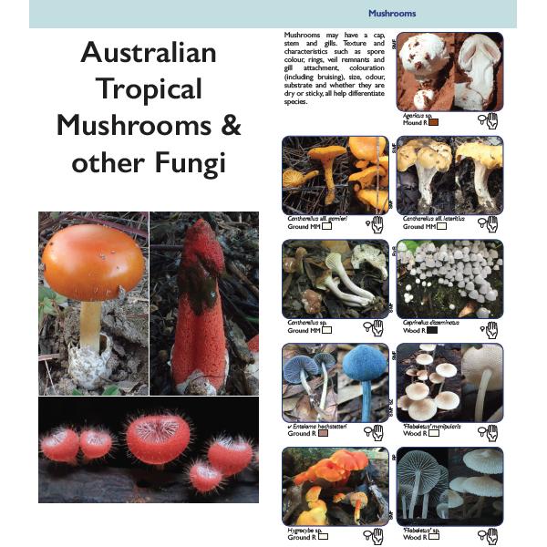 Australian Tropical Mushrooms & other Fungi